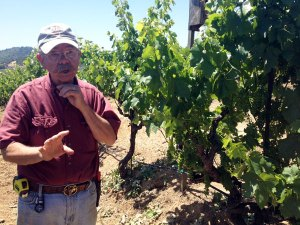 Hand-crafting small lot wines since 1991, Jim Rickards goal is to showcase the diverse soils and micro-climates of his vineyards. He has pioneered environmentally sensitive vineyard practices and been a proponent of sustainable farming techniques.