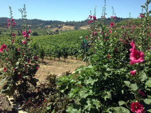 "J. Rickards Winery planned use of flowers, grasses, bird boxes and rainwater collection all add to the Jim's phrase whenever a visitor arrives at the tasting room: ""Welcome to my house."""